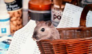 hamster shopping, covid-19, hamster buying